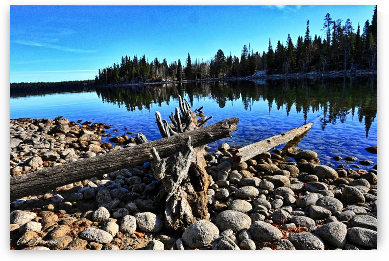 Driftwood on Jenny Lake by Ed St Germain