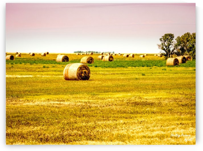Bales Saskatchewan by The Big Picture by JD