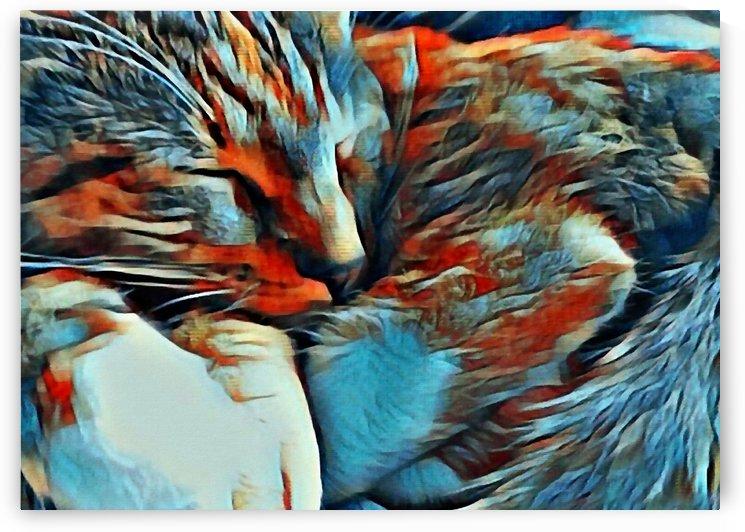 Sleeping Cat by Bruce Rolff