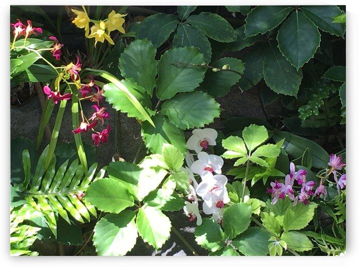 Denver-Botanical-Gardens-6 by Dogtown Guy