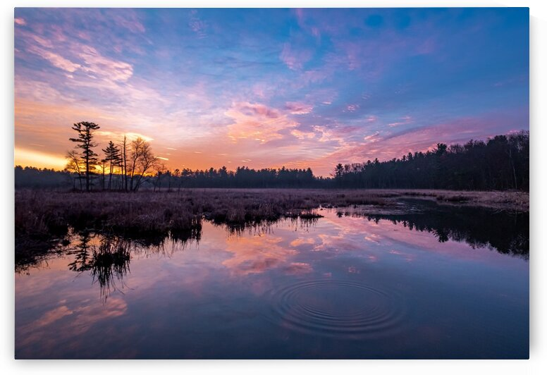 Forge Pond - Late November 1 by Dave Therrien