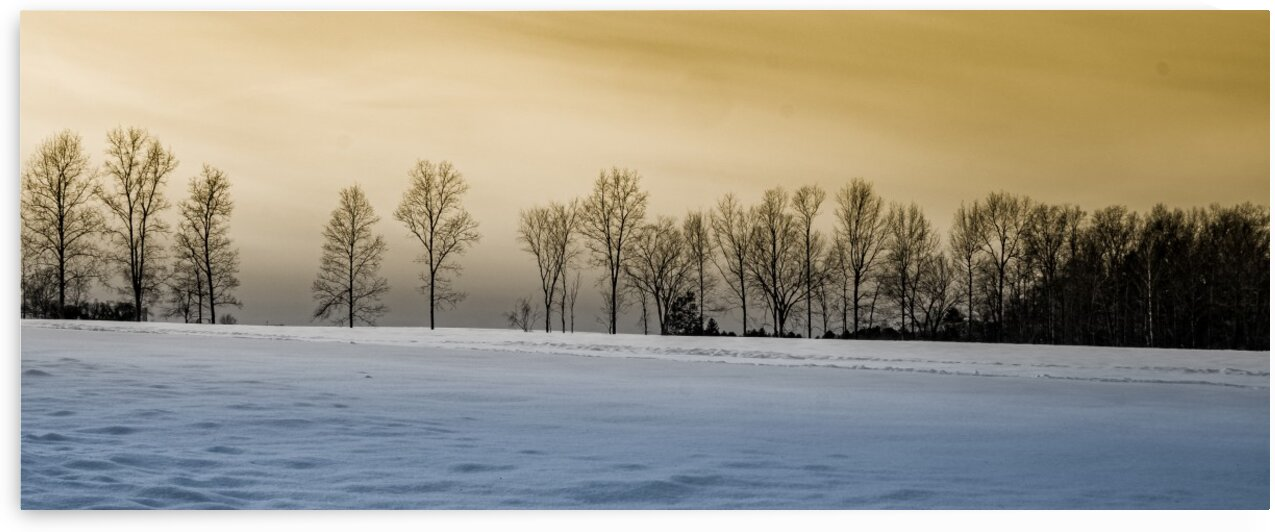 Treeline at Sunset by Dave Therrien