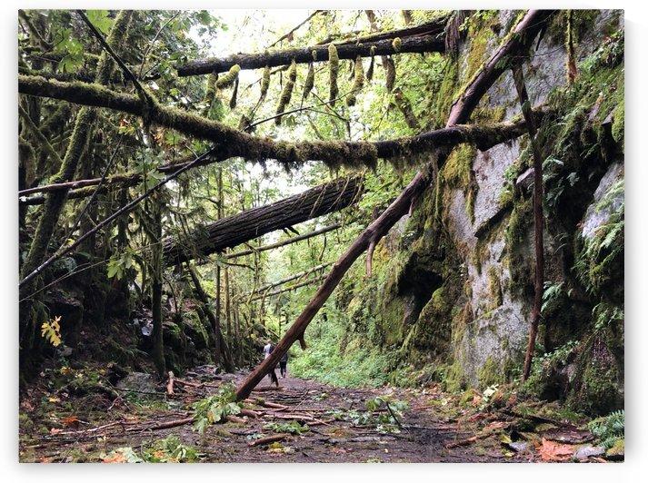 Fallen mossy trees blocking trail by Jamo