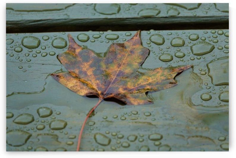 Autumn Rain by RBA Photography