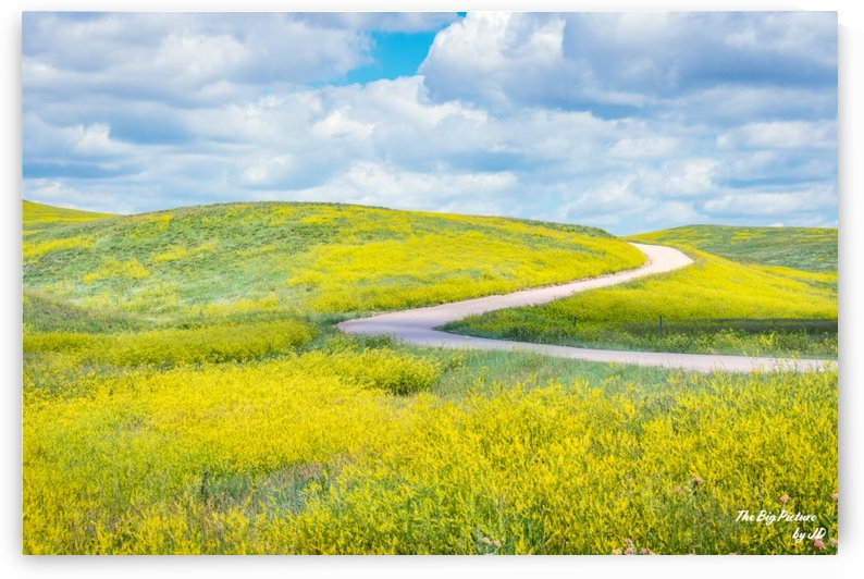 Custer State Park Winding Road by The Big Picture by JD