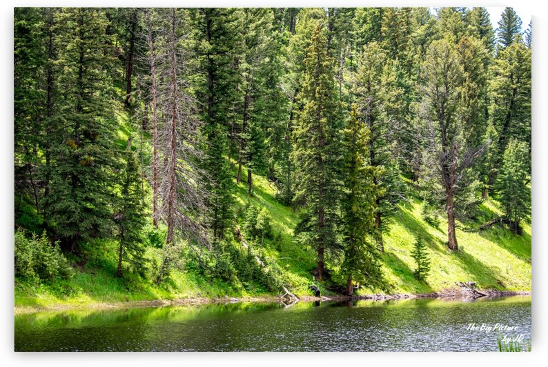 Yellowstone Bear Pond by The Big Picture by JD