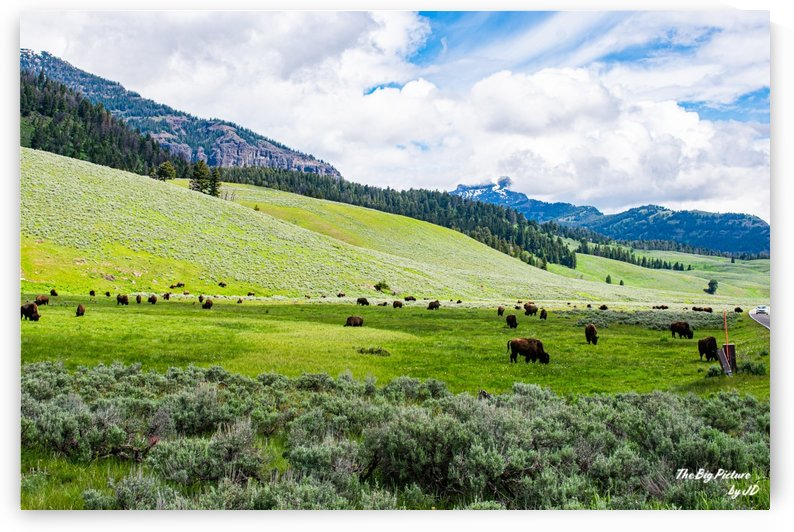 Yellowstone Bison Peak by The Big Picture by JD