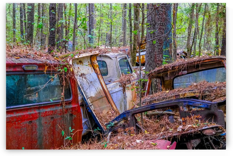 Junk Cars Through the Trees by Darryl Brooks