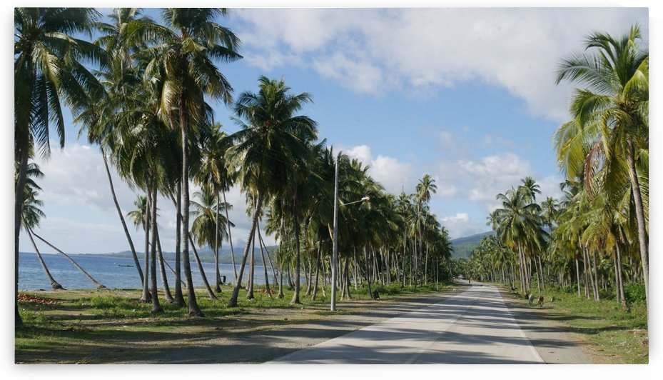 Coconut-lined Coastal Road by On da Raks