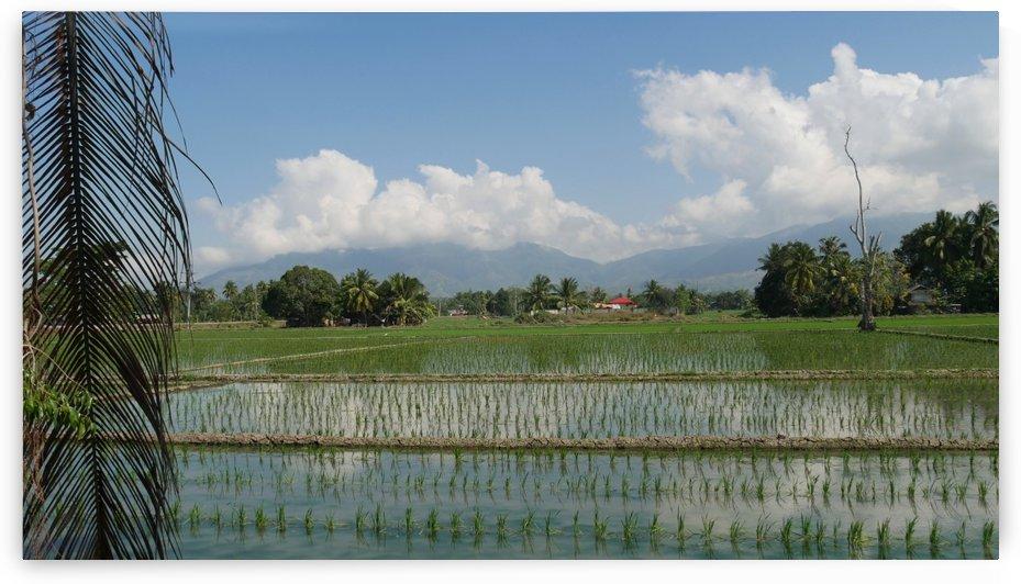 Rice Fields by Raksy
