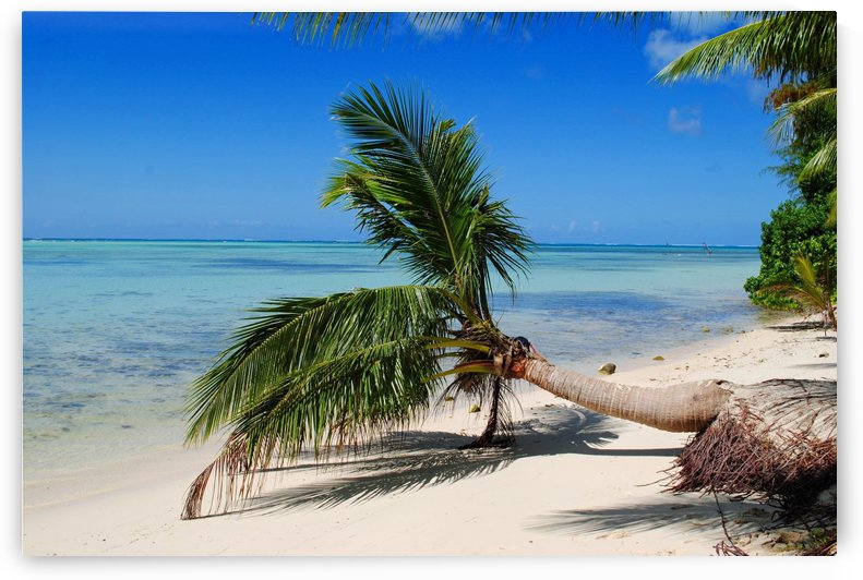 Bent Coconut on the Beach by On da Raks