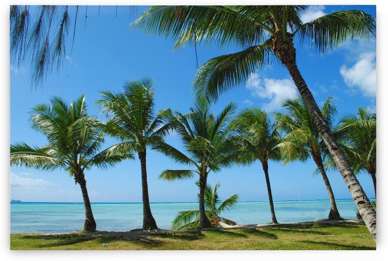 Coconut trees along the Beach by On da Raks