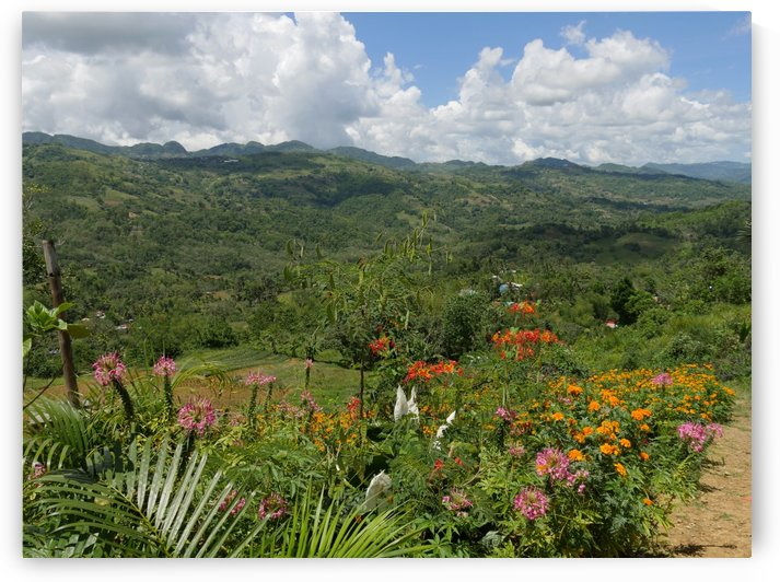Colorful Flowers with Mountains in the Distant Philippines by On da Raks