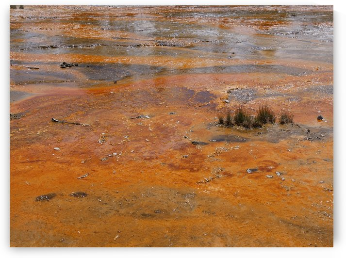 Bacteria Mat Yellowstone National Park by On da Raks