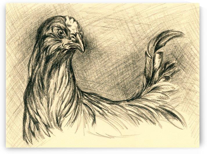 Black Cockerel by MM Anderson
