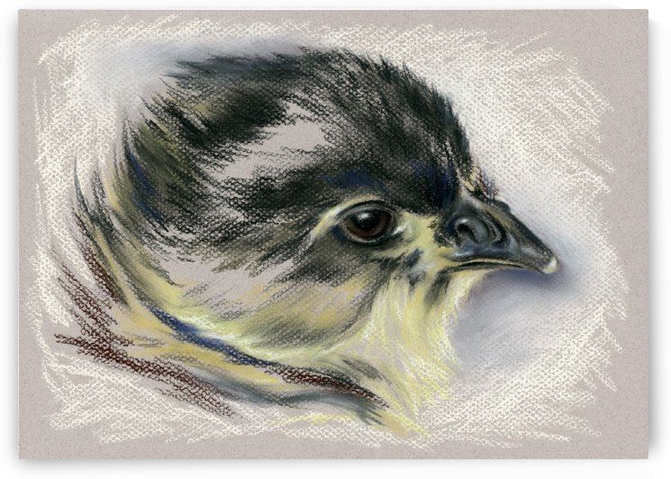 Black Australorp Chick Portrait by MM Anderson