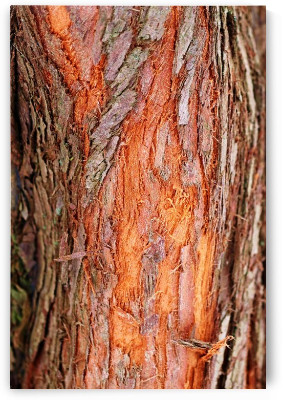 Dawn Redwood Bark Abstract by Deb Oppermann