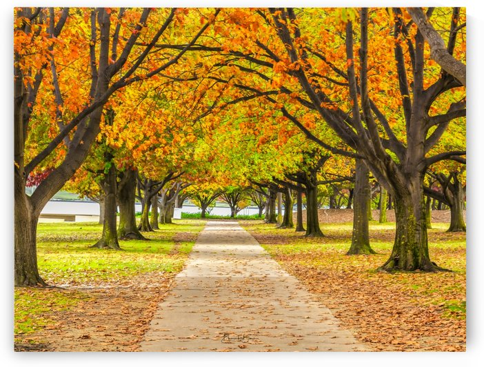 AUTUMNAL CANBERRA by BBCLICKZ - Bhaumik Bumia Photography