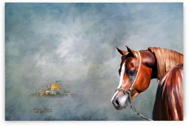 jerusalem arabian horse by fadel ayoub