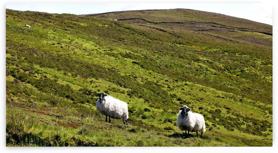 Remote Hills of Donegal by Lexa Harpell
