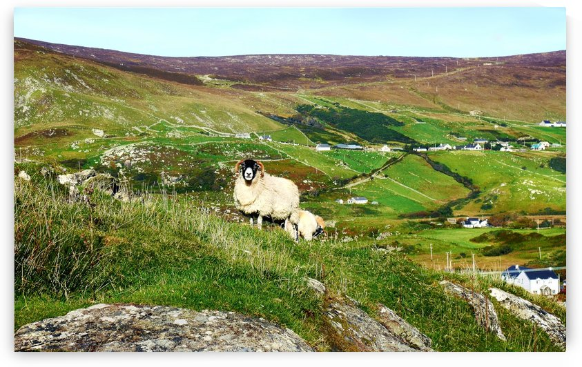 Local Resident - County Donegal by Lexa Harpell
