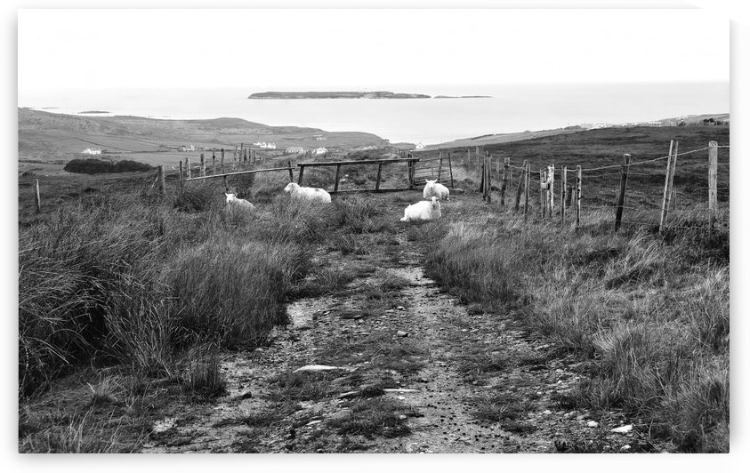 Path to Malin Beg in Autumn in BW by Lexa Harpell