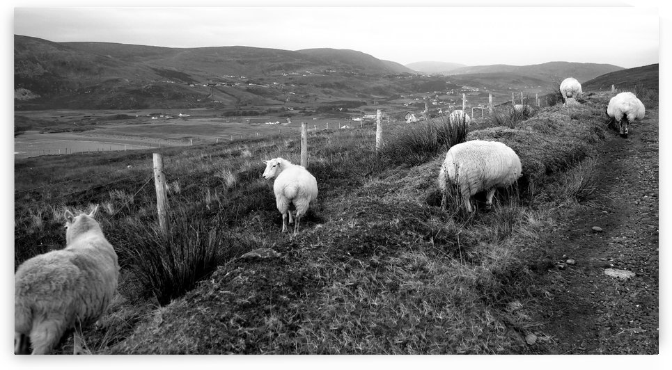 Path to Glencolmcille in BW by Lexa Harpell