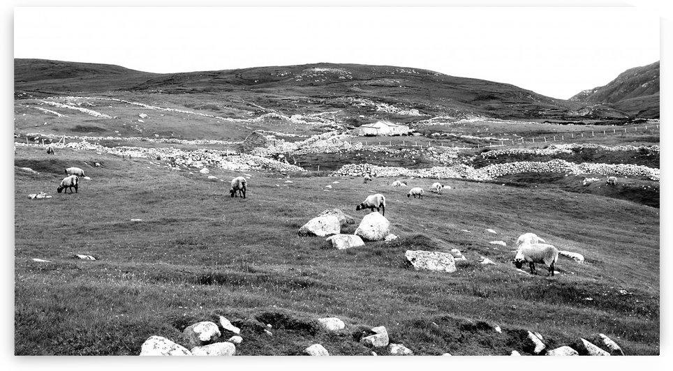 Sheep and Stones - Remote Port in BW by Lexa Harpell