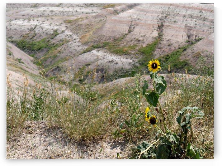 Touch of Yellow Badlands National Park South Dakota by On da Raks