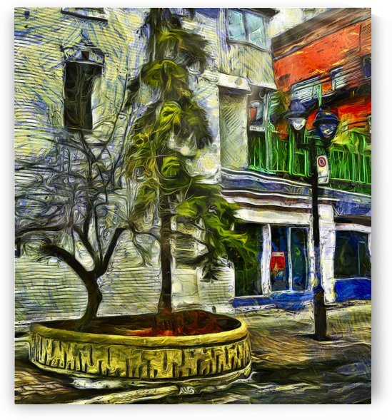 Tree on Duluth Street by Robert Knight