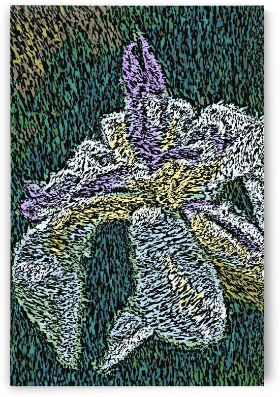 A Iris Dreamland by Joy Watson