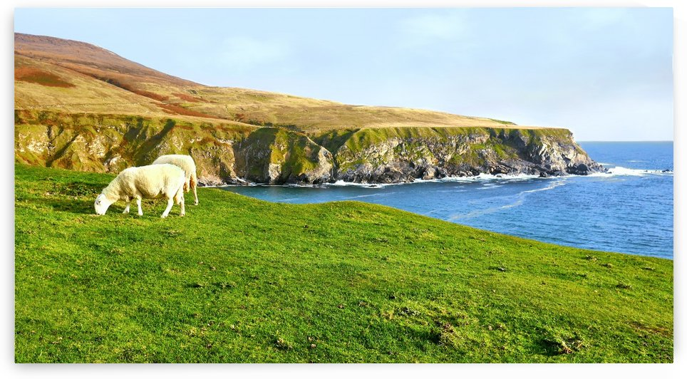 Sheep Grazing - Silver Strand Beach by Lexa Harpell