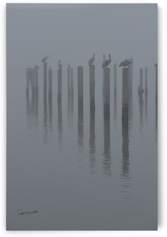 Pelicans in the Gulf Fog by Shadow and Form