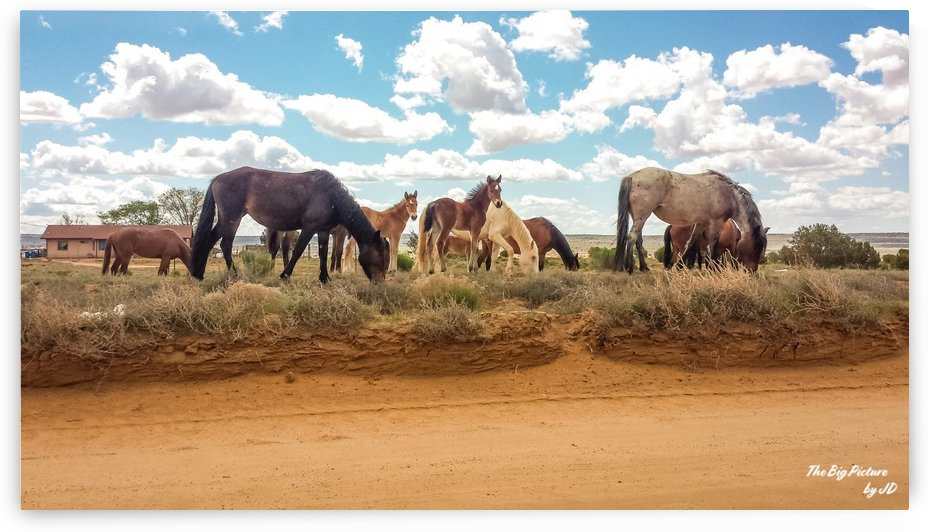 Horses On The Pinon Road by The Big Picture by JD