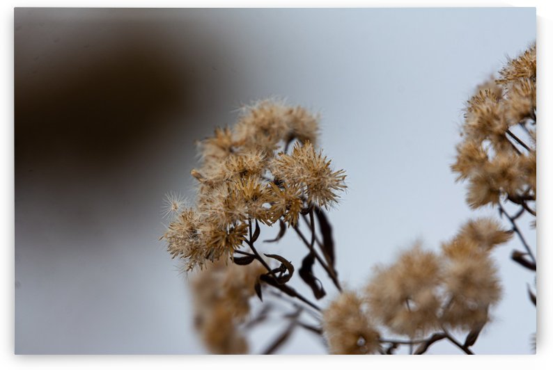 Winter Flowers by Chris Couling