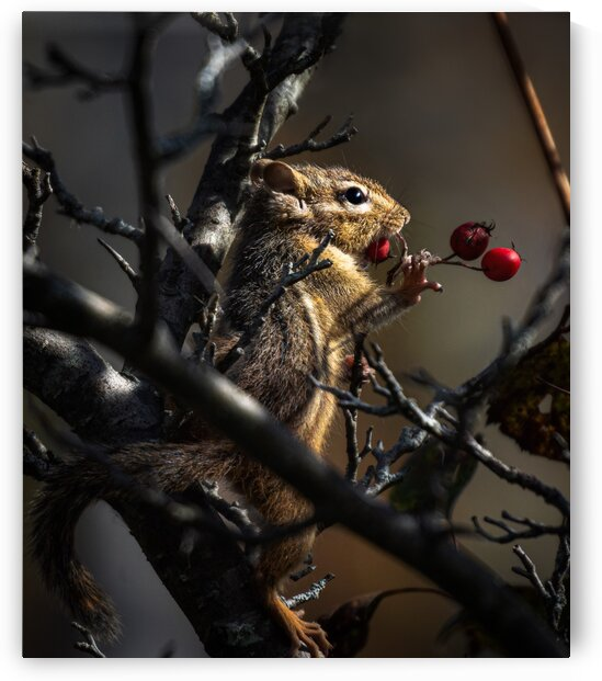 Berries by Chris Couling
