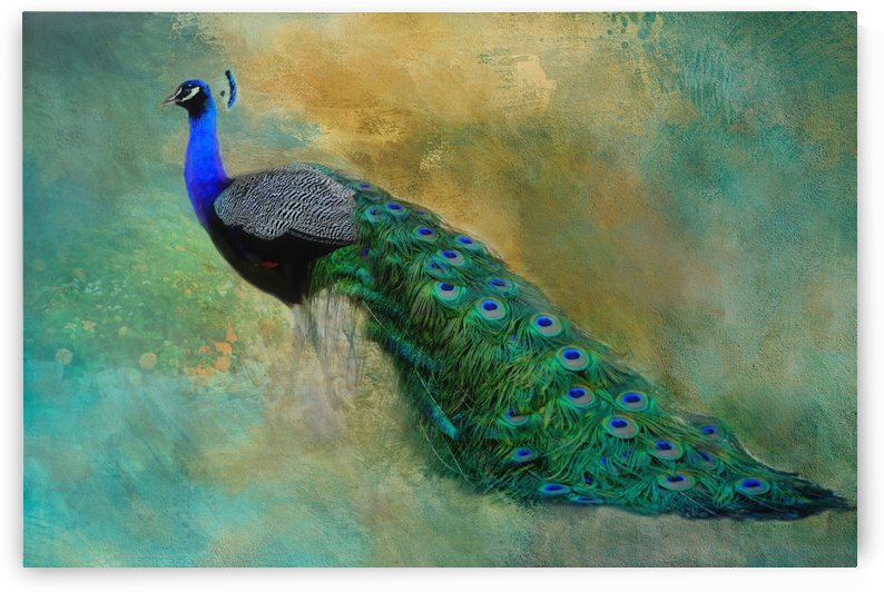 Lord Peacock  by HH Photography of Florida