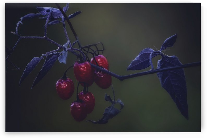 Nightshade by Chris Couling