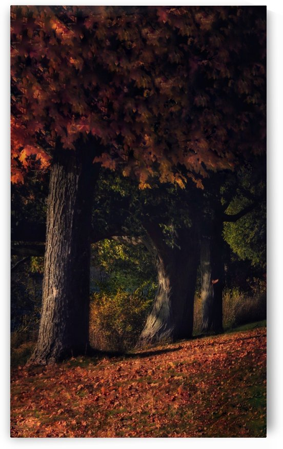 Maples by Chris Couling