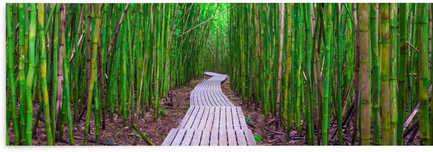 Bamboo Boardwalk EXPANDED by Hudson Marsh