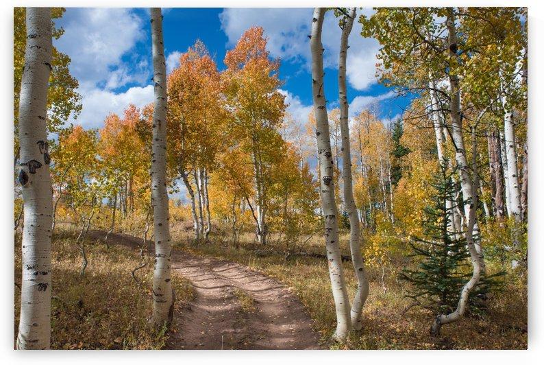 Aspen Road EXPANDED by Hudson Marsh