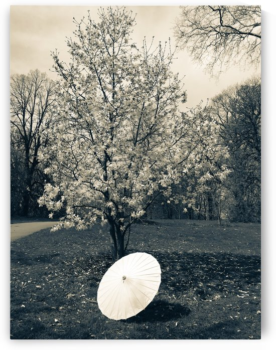 Black and white nature  by  Jade Renteria