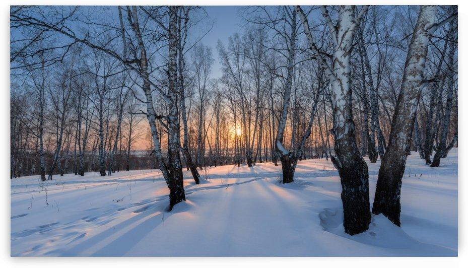 DSC_5937 1    2 by Dobrydnev