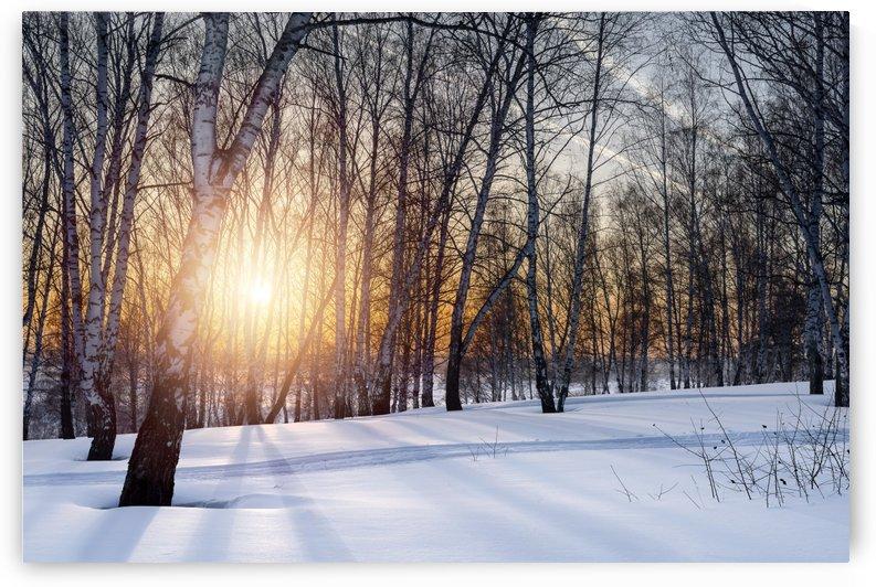 DSC_0351 10    1 by Dobrydnev