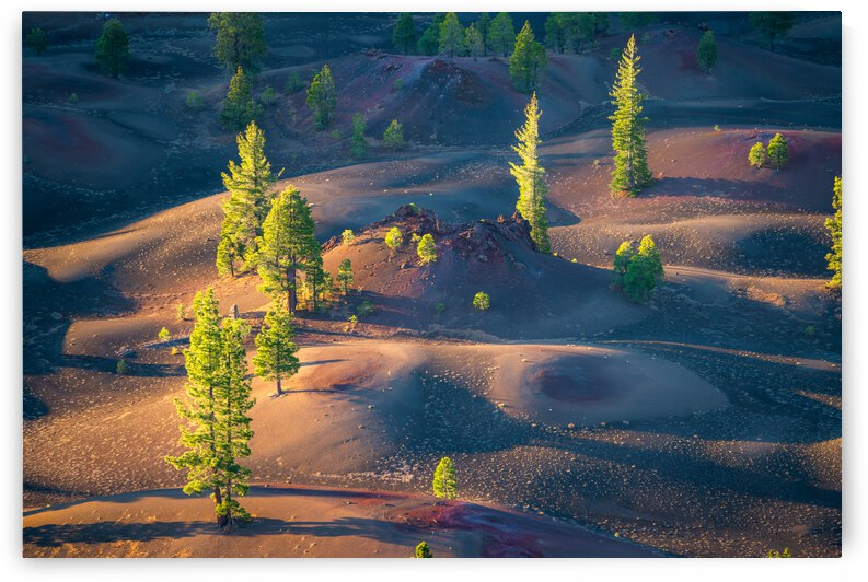Painted Dunes by Noah Lang
