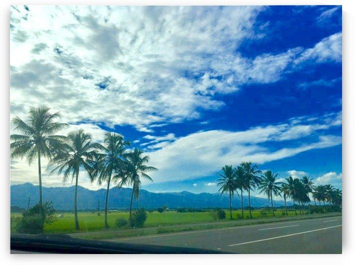 Palm tree by  Jade Renteria