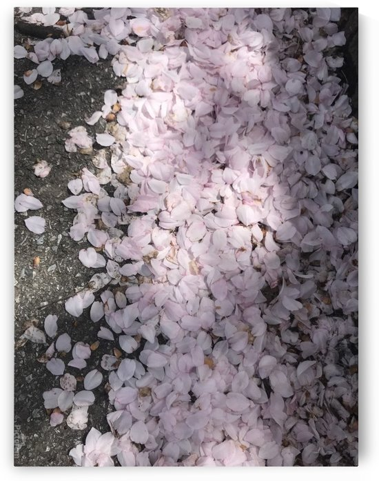 A road of petals by  Jade Renteria