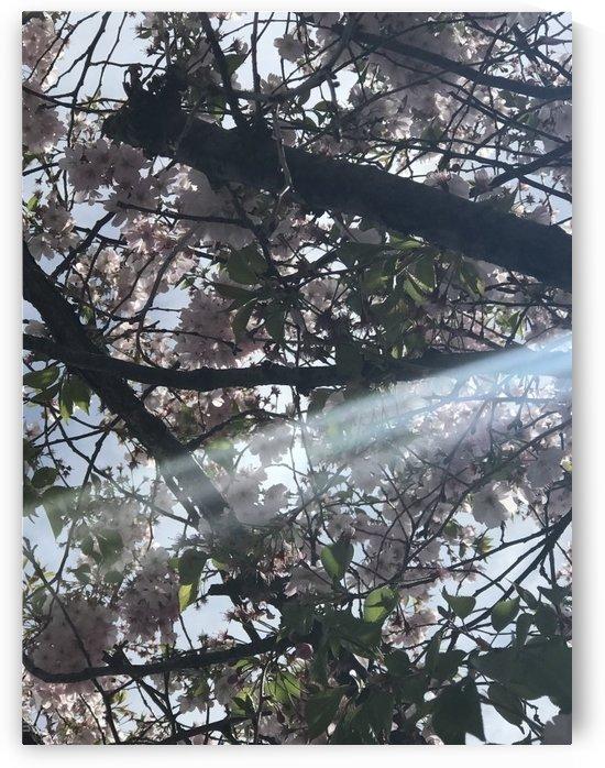 Bright day  by  Jade Renteria