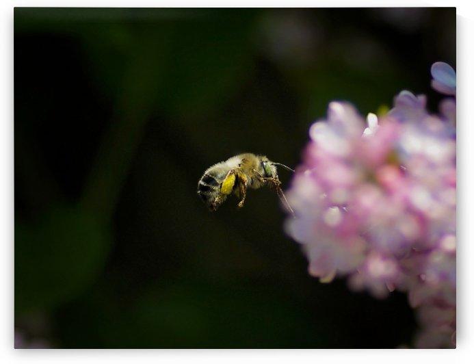 Bee Happy by Amanda Corcoran
