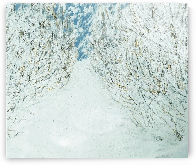 Winter Passage by djjf